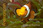 wk_05_uk_cute_and_curious_amphiprion_ocellaris_5231414_web