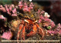 de_kr_19_02_crustacea_dekorateurkrabbe_c190328_32_web