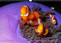 de_kr_19_11_amphiprion_ocellaris_falscherclownfisch_12_3280605f_32_web