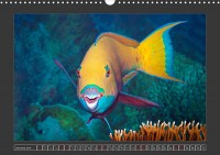 uk_cr_19_01_chlorurus_gibbus_heavybeakparrotfish_3170159fg_32_web