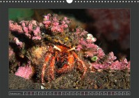 uk_cr_19_02_crustacea_dekoratorcrab_190328fg_32_web