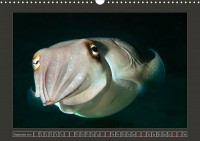 uk_cr_19_09_sepia_esculenta_goldencuttlefish_2180609f_32_web