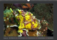 uk_cr_19_10_antennarius_maculatus_wartyfrogfish_4260405f_32_web